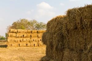 wheat straw pile